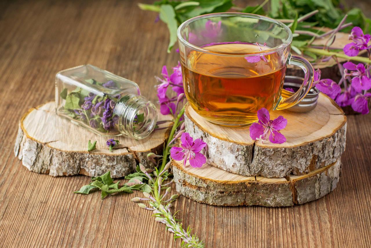 иван чай полезные свойства и применение