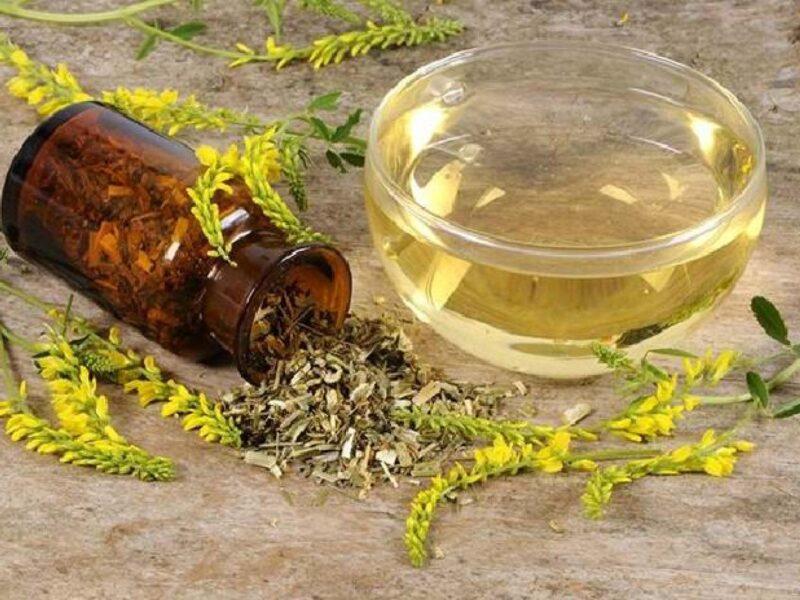 Донник лекарственный - лечебные свойства, применение, рецепты, противопоказания