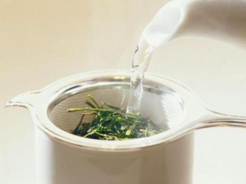 чай из багульника болотного