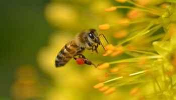 Укусы пчел, ос, шмелей