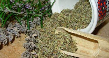 Лечебные травы противопоказания