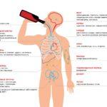 Влияние алкоголя на организм: ТОП-7 опасностей для здоровья
