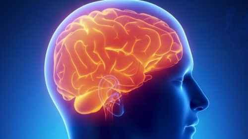Сбор трав для сосудов головного мозга