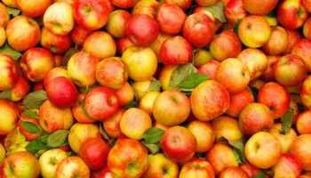 Польза яблок для человека