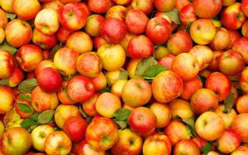 Польза яблок: при гипертонии, для почек, при беременности, для детей