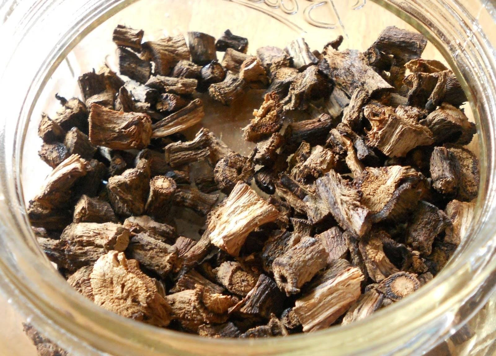 Полезные свойства корни цикория и противопоказания thumbnail