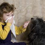 Поллиноз: симптомы, причины и лечение. Профилактика и рекомендации