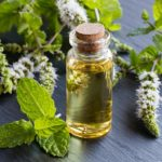 Эфирное масло мяты перечной, свойства и прменение