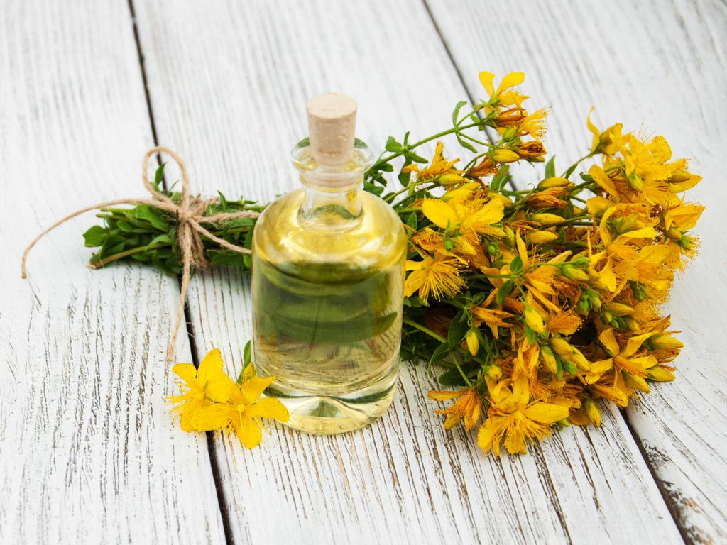 Зверобой лечебные свойства и применение, трава зверобой противопоказания