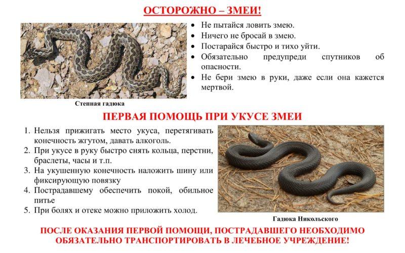 при укусе змеи